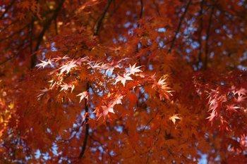 紅葉祭り1.JPG