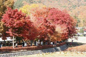 紅葉祭り2.JPG