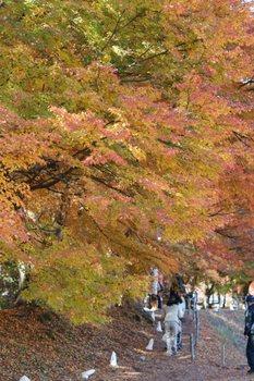 紅葉祭り4.JPG
